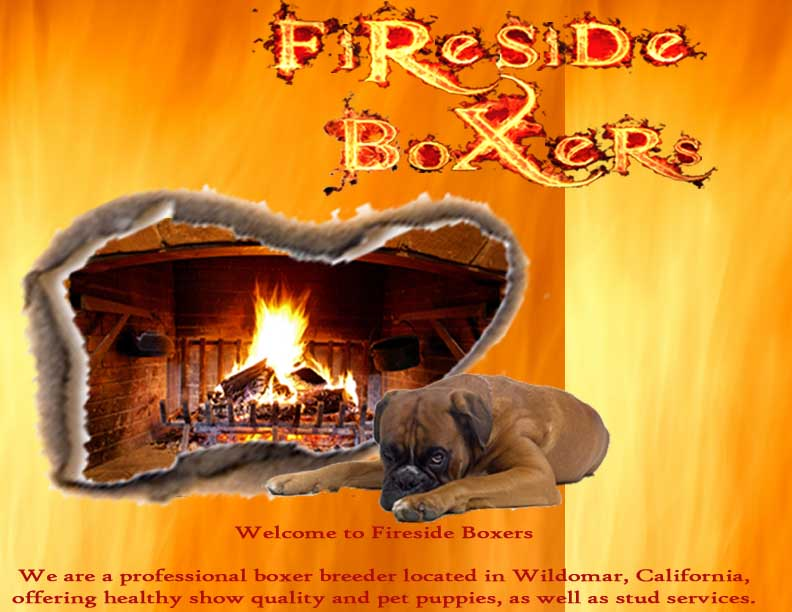 Fireside Boxers-A California Boxer Breeder