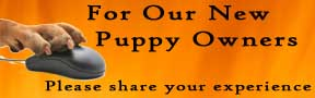 Share your puppy experience